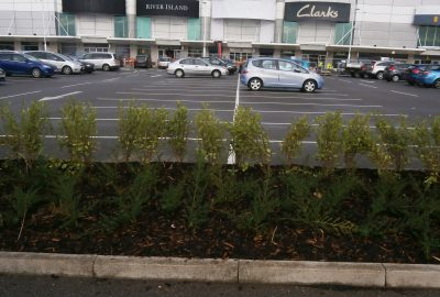 Retail park shrubs in car park