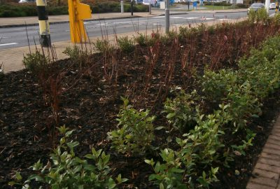 Plants by retail park