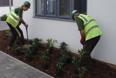 Shrubs being planted by modern building