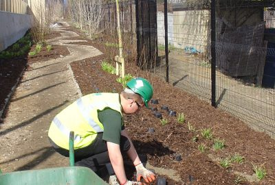 Shrubs being planted on school path