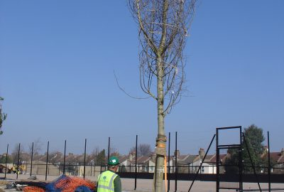 Tree being planted in school