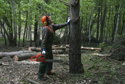 Tree surgery with chainsaw