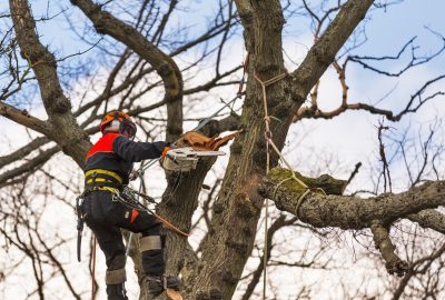 Tree branches being removed