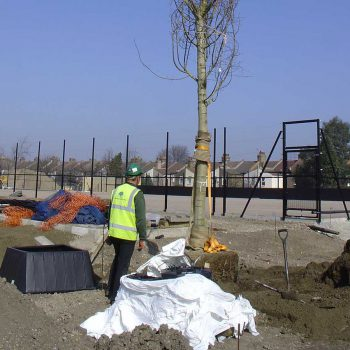 Academy School Ilford tree planting