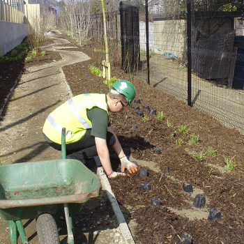 Academy School Ilford shrub planting