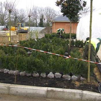 Balls Park Hertford shrubs being planted