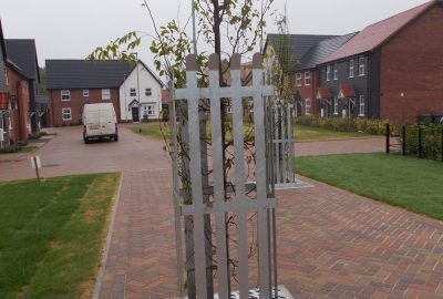 Semi mature tree planted in residential landscape setting