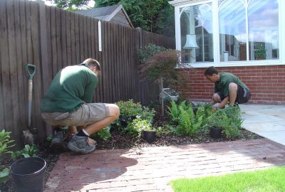 Soft landscaping shrubs being installed